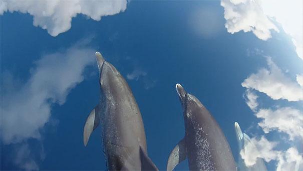 Δελφίνια στον ουρανό