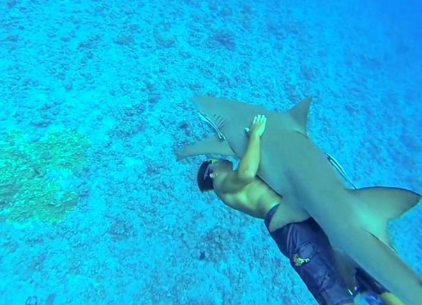 Δύτης αγκαλιάζει καρχαρία