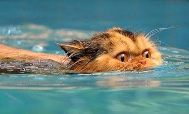 Γάτες που αγαπούν το νερό