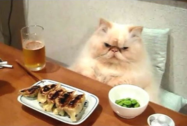 Γάτες που φέρονται σαν άνθρωποι