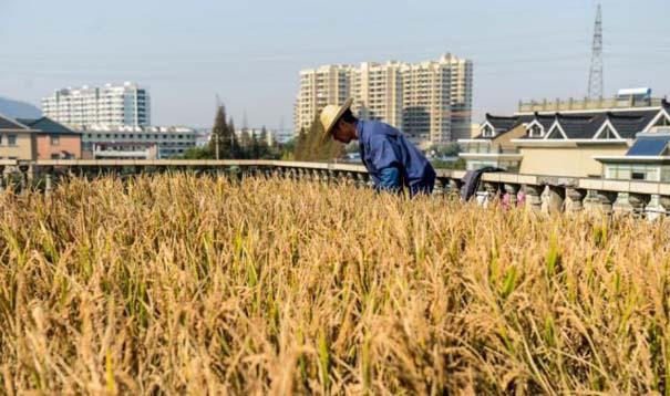 Κινέζος αγρότης έλυσε το πρόβλημα χώρου με έναν ασυνήθιστο τρόπο (3)
