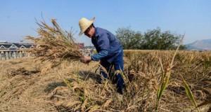Κινέζος αγρότης έλυσε το πρόβλημα χώρου με έναν ασυνήθιστο τρόπο