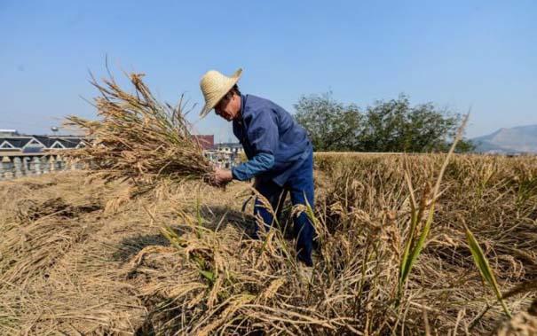 Κινέζος αγρότης έλυσε το πρόβλημα χώρου με έναν ασυνήθιστο τρόπο (1)