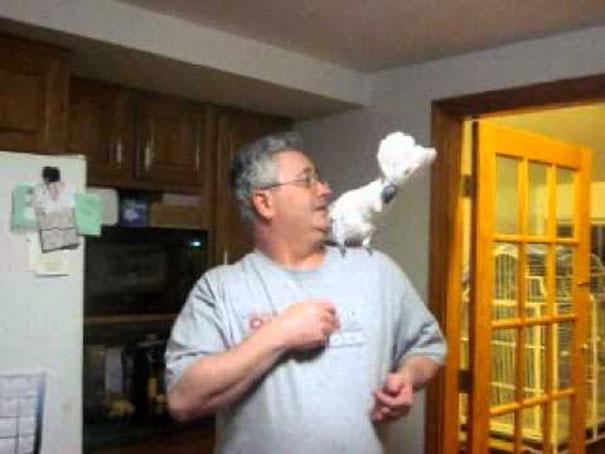 Το ξεκαρδιστικό ξέσπασμα ενός τρομερά αθυρόστομου παπαγάλου