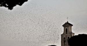 Μαζική επίθεση από κουτσουλιές πουλιών στη Ρώμη