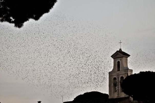 Μαζική επίθεση από κουτσουλιές πουλιών στη Ρώμη (1)