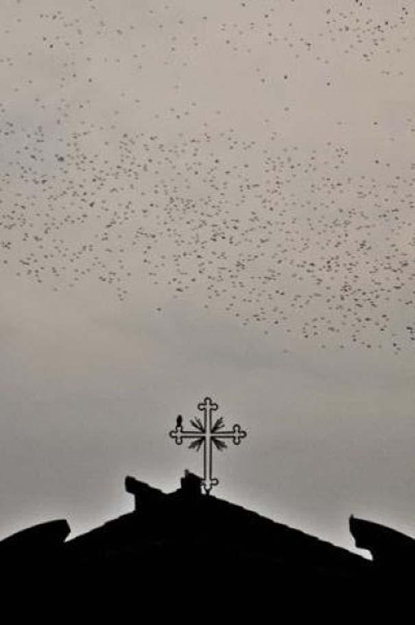 Μαζική επίθεση από κουτσουλιές πουλιών στη Ρώμη (2)