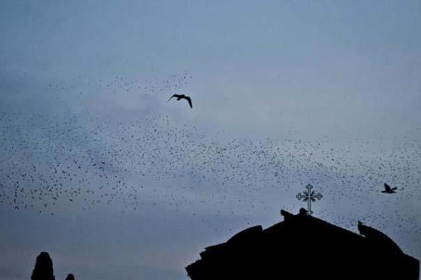 Μαζική επίθεση από κουτσουλιές πουλιών στη Ρώμη (4)