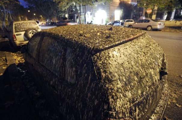 Μαζική επίθεση από κουτσουλιές πουλιών στη Ρώμη (5)