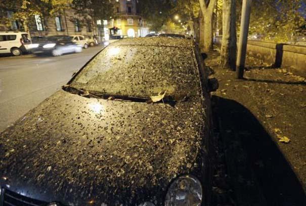 Μαζική επίθεση από κουτσουλιές πουλιών στη Ρώμη (6)