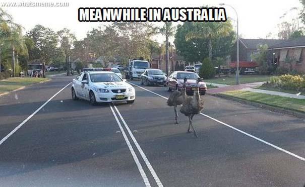 Μόνο στην Αυστραλία (8)