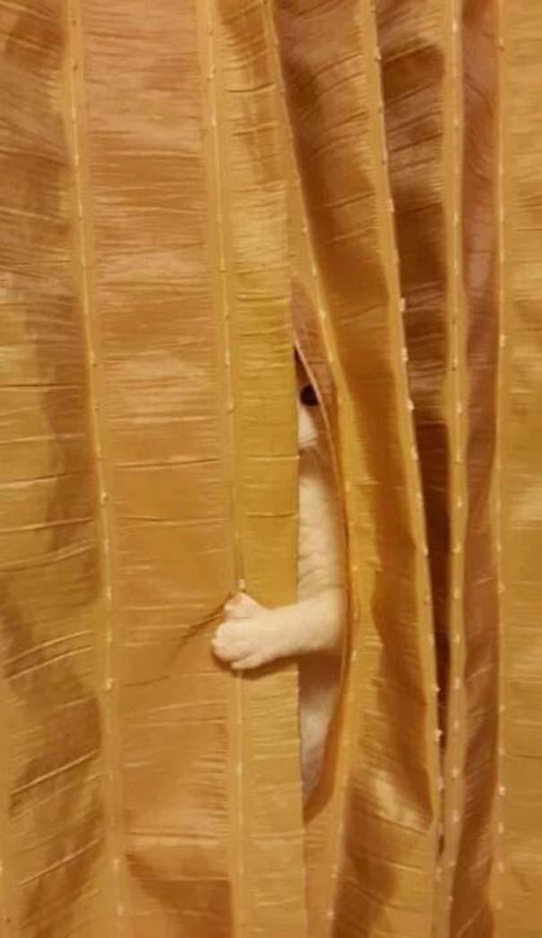 Όταν τα ζώα παίζουν κρυφτό (1)