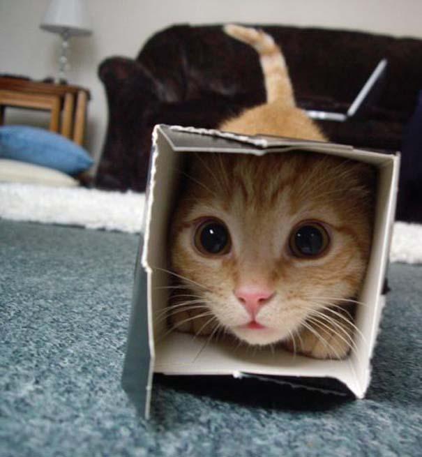 Όταν τα ζώα παίζουν κρυφτό (7)