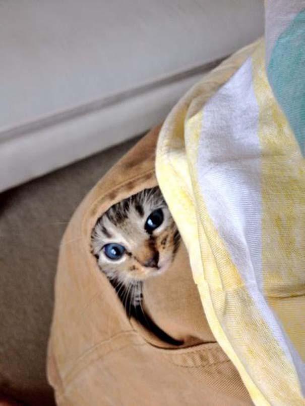 Όταν τα ζώα παίζουν κρυφτό (10)