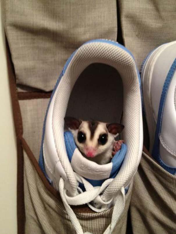 Όταν τα ζώα παίζουν κρυφτό (14)