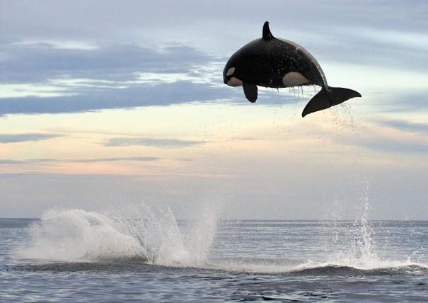Ο... Jordan των θαλασσών   Φωτογραφία της ημέρας