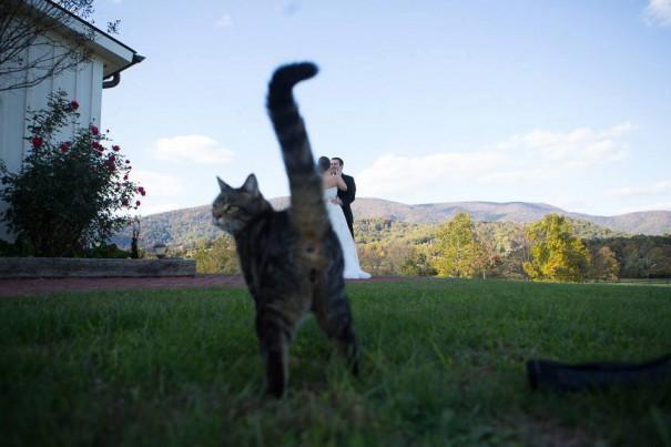 Η άποψη μιας γάτας για τον γάμο των ιδιοκτητών της | Φωτογραφία της ημέρας