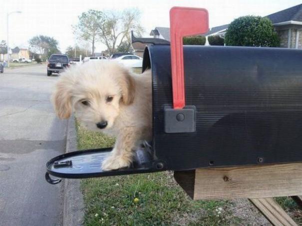 Έχεις γράμμα | Φωτογραφία της ημέρας