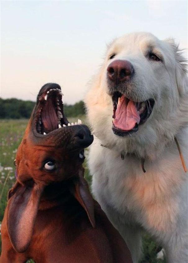 Όλοι έχουμε έναν θεότρελο φίλο | Φωτογραφία της ημέρας