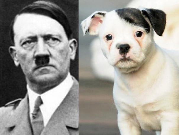 Το κουτάβι που θυμίζει Χίτλερ | Φωτογραφία της ημέρας