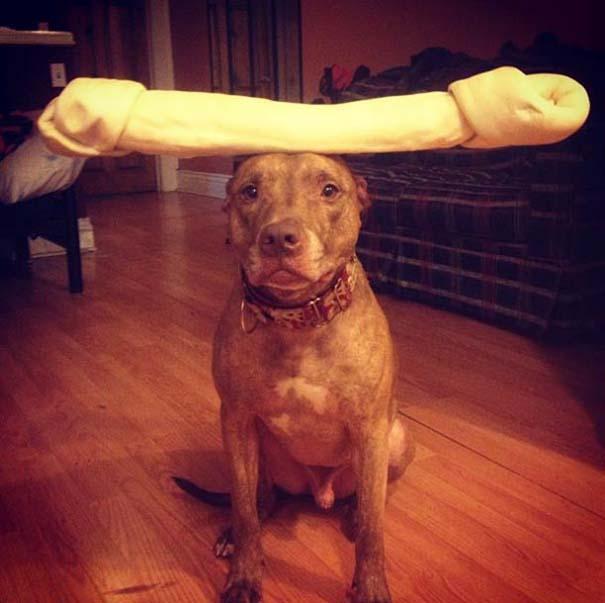 Ο πιο υπομονετικός σκύλος στον κόσμο (1)