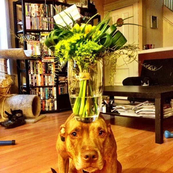 Ο πιο υπομονετικός σκύλος στον κόσμο (4)