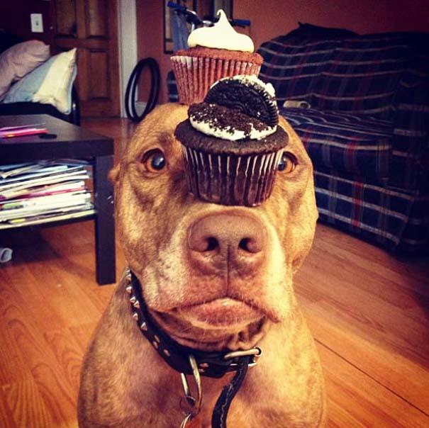 Ο πιο υπομονετικός σκύλος στον κόσμο (7)