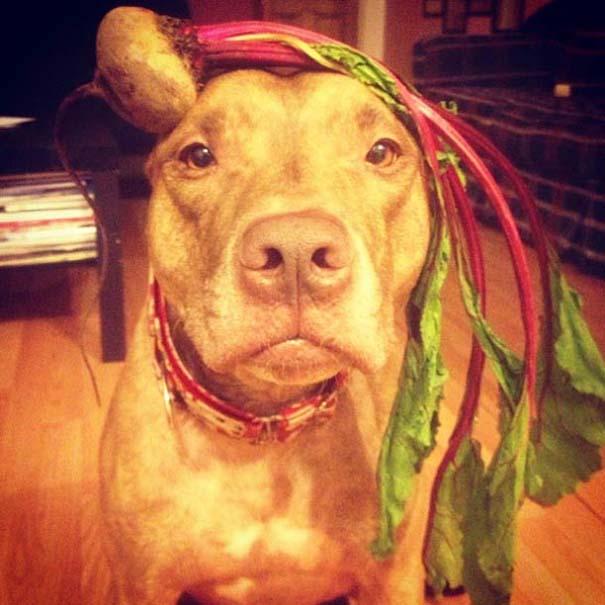 Ο πιο υπομονετικός σκύλος στον κόσμο (10)
