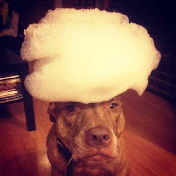 Ο πιο υπομονετικός σκύλος στον κόσμο (11)