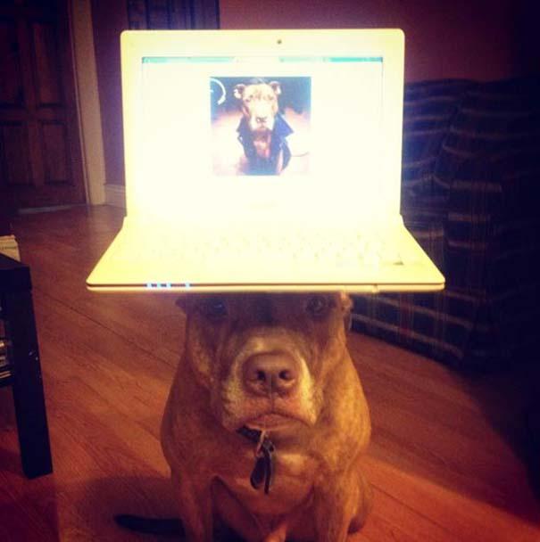 Ο πιο υπομονετικός σκύλος στον κόσμο (12)