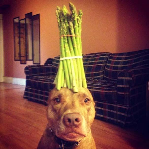 Ο πιο υπομονετικός σκύλος στον κόσμο (16)