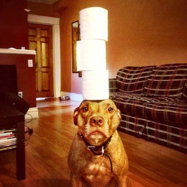 Ο πιο υπομονετικός σκύλος στον κόσμο (18)