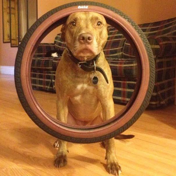 Ο πιο υπομονετικός σκύλος στον κόσμο (20)