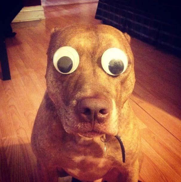 Ο πιο υπομονετικός σκύλος στον κόσμο (21)