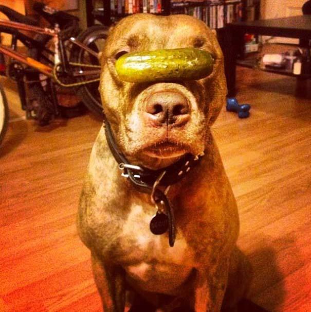 Ο πιο υπομονετικός σκύλος στον κόσμο (24)