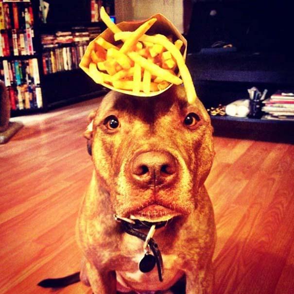 Ο πιο υπομονετικός σκύλος στον κόσμο (27)