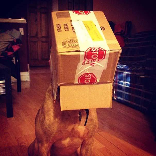 Ο πιο υπομονετικός σκύλος στον κόσμο (33)