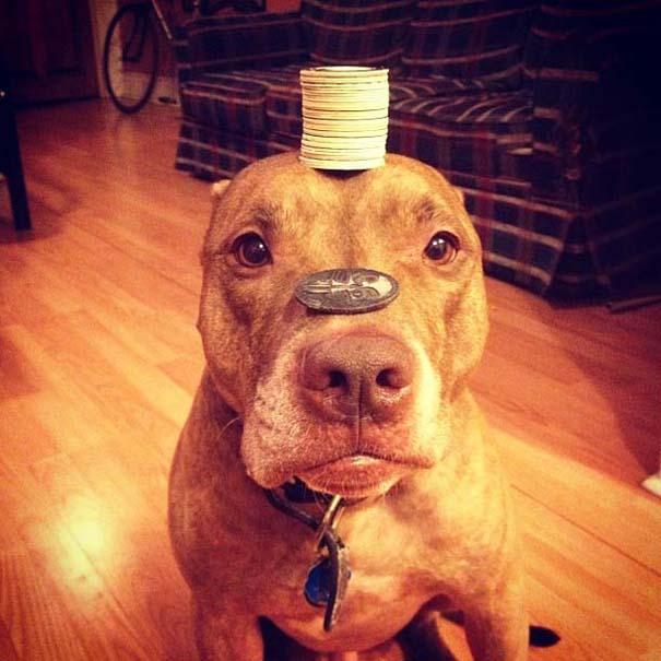 Ο πιο υπομονετικός σκύλος στον κόσμο (34)
