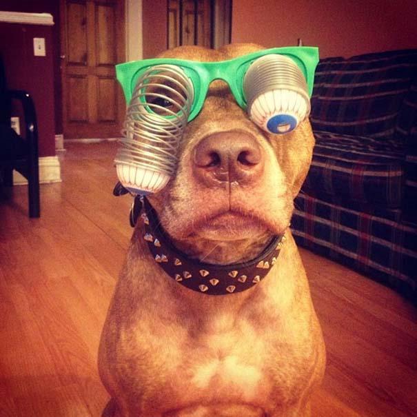 Ο πιο υπομονετικός σκύλος στον κόσμο (38)