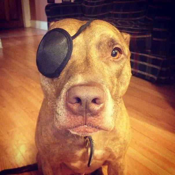 Ο πιο υπομονετικός σκύλος στον κόσμο (39)