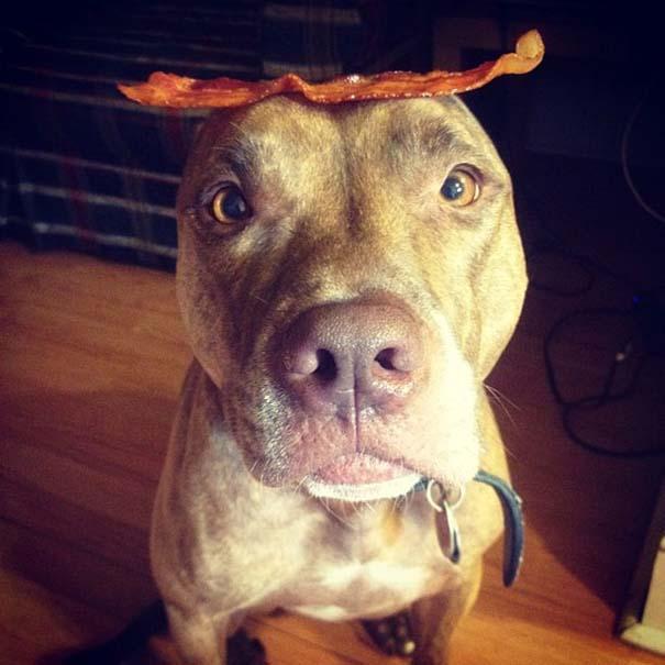 Ο πιο υπομονετικός σκύλος στον κόσμο (40)