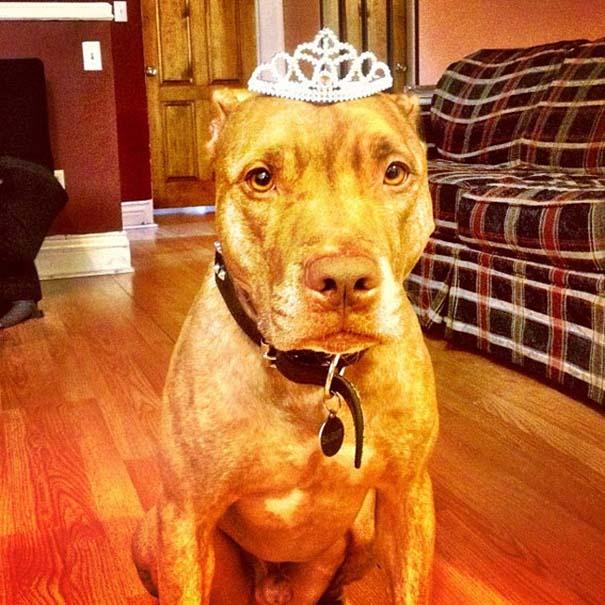 Ο πιο υπομονετικός σκύλος στον κόσμο (46)