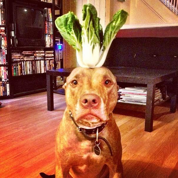 Ο πιο υπομονετικός σκύλος στον κόσμο (47)
