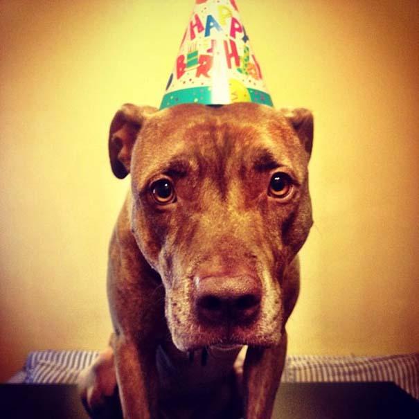 Ο πιο υπομονετικός σκύλος στον κόσμο (48)