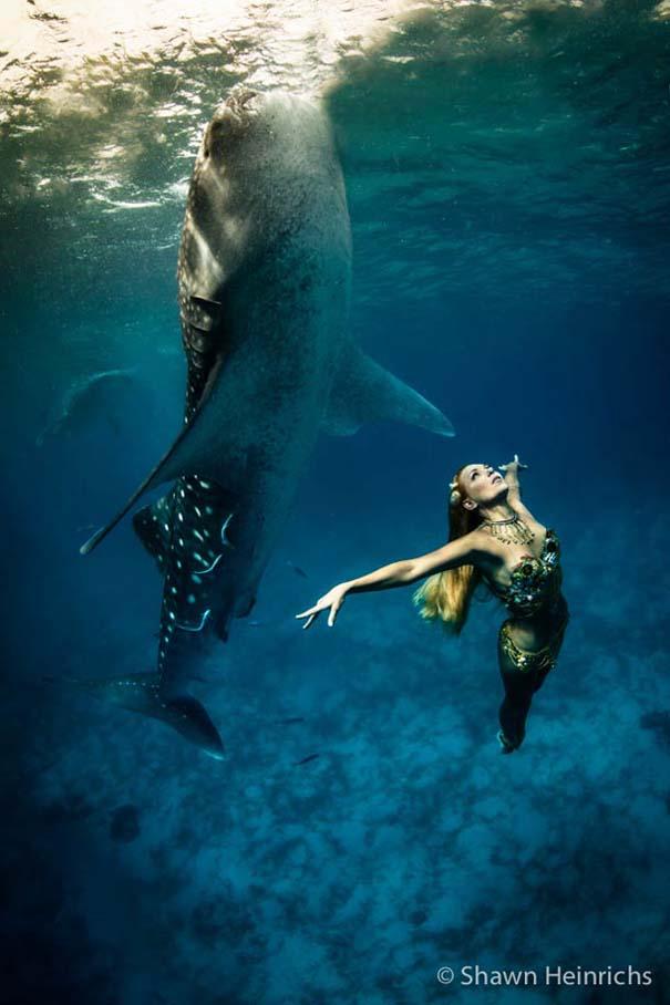 Χορεύοντας με τις φάλαινες (1)