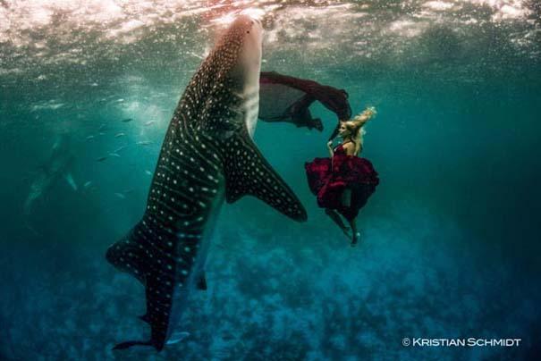 Χορεύοντας με τις φάλαινες (2)