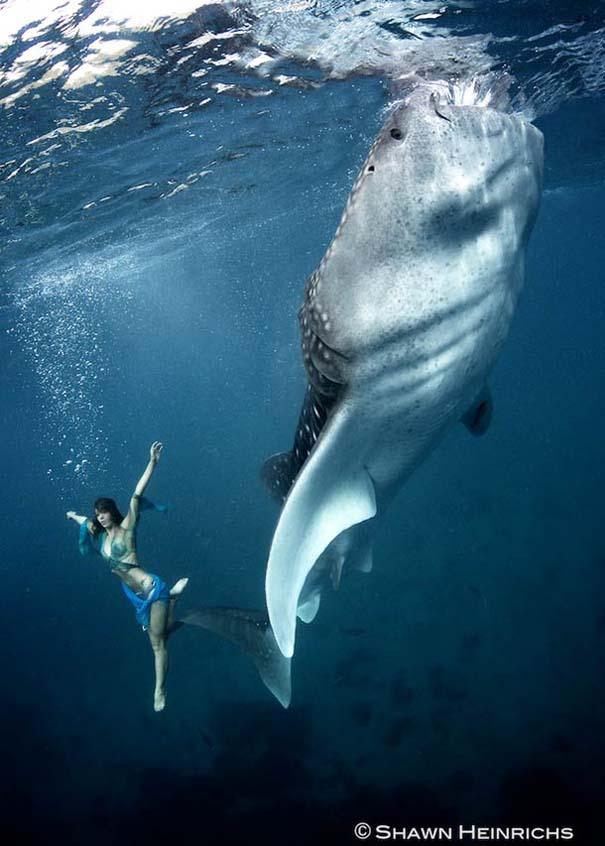 Χορεύοντας με τις φάλαινες (3)