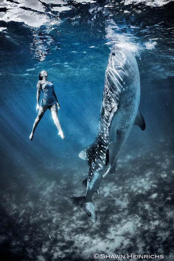 Χορεύοντας με τις φάλαινες (5)