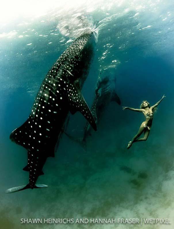 Χορεύοντας με τις φάλαινες (6)