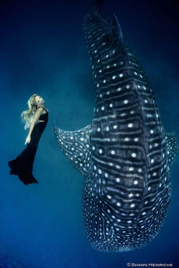 Χορεύοντας με τις φάλαινες (7)
